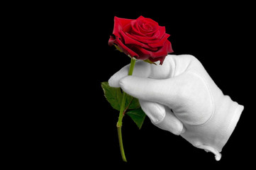 Red rose and white glove