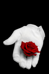 Red rose held in a white glove