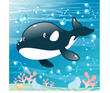 Baby Killer Whale