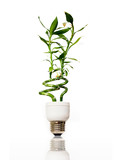 Fototapety Eco light bulb with bamboo