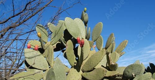Fotobehang Algerije flore...kabylie