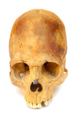 Old prehistoric human skull isolated