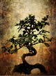 grungy bonsai