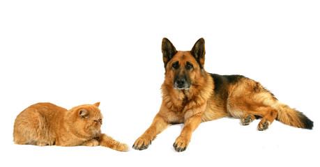chien et chat persan