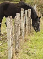 cavallo che mangia fuori dalla staccionata