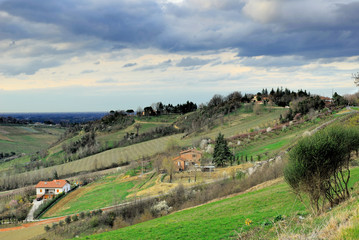Vineyards near Imola Italy