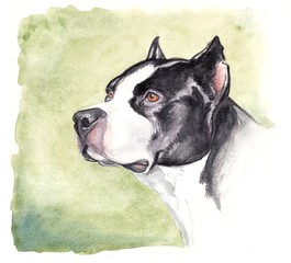 watercolor pitbull
