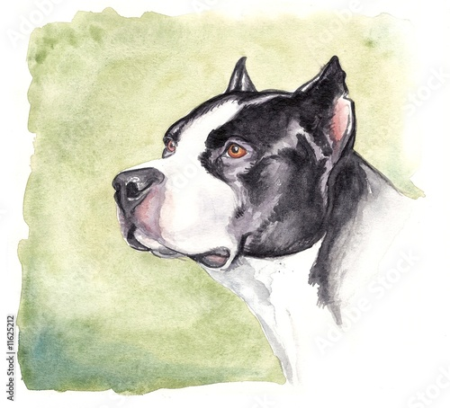 watercolor pitbull