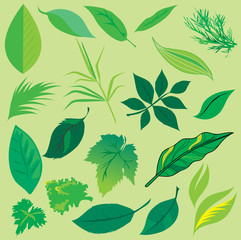 Set of leafs design elements