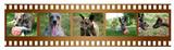 pellicola con cani poster