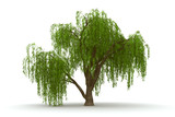 Fototapety 3d green tree weeping willow isolate