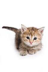 Small kitten on white background