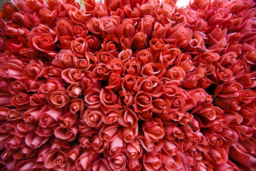A Hundred Pink Roses