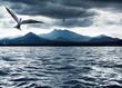 roleta: Ocean Birds