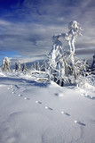 footprints of yeti in snow high in mountains poster