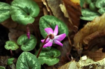 Winter-Flowers