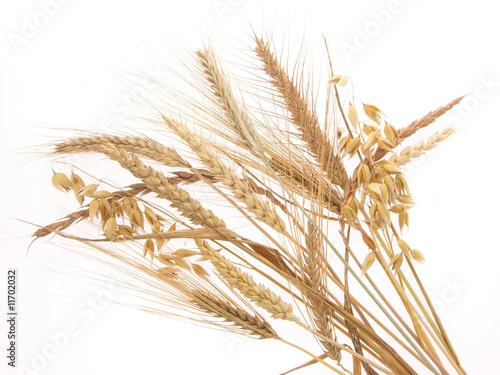 Getreidesorten sind
