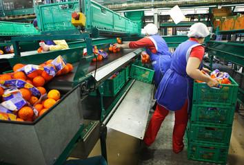 factory of oranges