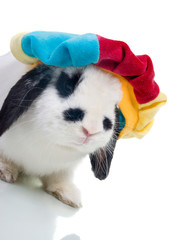 Cute easter rabbit in hat  close-up isolated