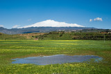 flowered grass with rainwater and snowy volcano Etna poster