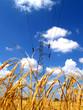 Rice farm 3