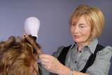 mature attractive hair stylist blow dries hair poster