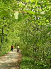 Velofahrer im Frühling/biking in spring