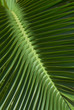 Pattern of tropical palm leaves.