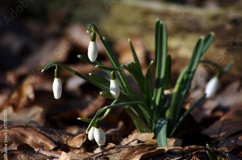 Frühlingsblume im Wald