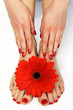 Red manicure and pedicure with delicate herbera