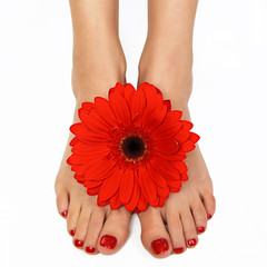 Feet with red manicure and gerbera