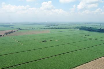 Foto aerea de cultivo de caña de azúcar 1