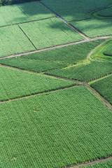 Foto aerea de cultivo de caña de azúcar 5