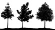 young trees