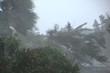 Hurricane Winds and Rain