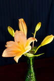 Orange Asiatic Lily in a small green vase. poster