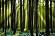 roleta: Frischer Wald mit Sonnenstrahlen