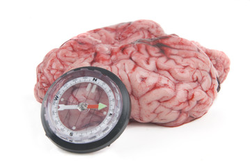 conceptual alzheimer with compass and brain desoriented