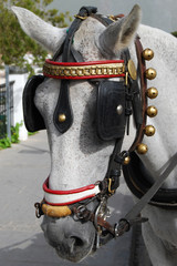 Horse Taxi at Mijas. Andalusia. Spain