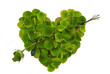 Green Rose Petal Heart with arrow