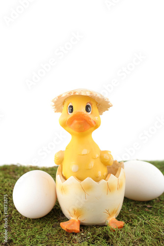 easter hatched chick