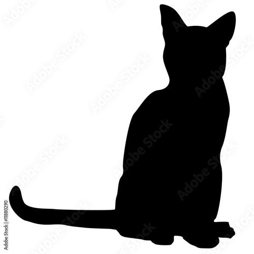 site de chat algerien sans inscription avec cam française