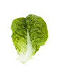 romaine lettuce leaf isolated
