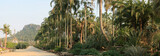 Fototapety Nong Nooch tropical garden