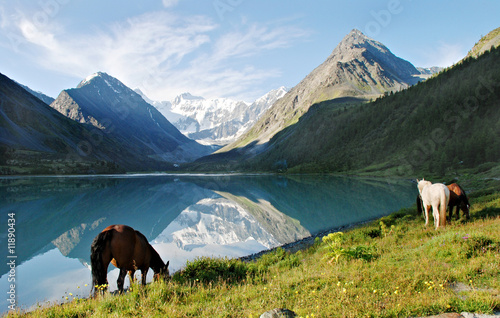 Horses near mountain lake Ak-kem, Altai, Russia