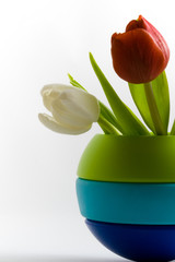white and red tulips in a