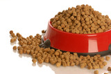 bowl of dog kibble overflowing in dog dish poster