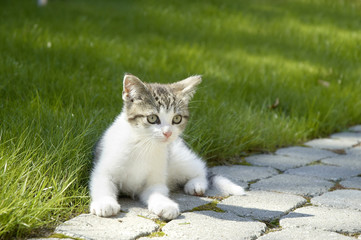Young cat lying on the lawn