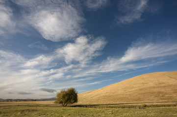 Cloudy blue sky, hill and lone tree