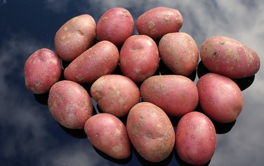 Close-up of Rooster potatoes